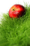 Apple in Grass Royalty Free Stock Images