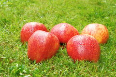 Apple in the grass Royalty Free Stock Photography