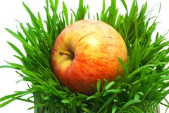 Apple in grass Stock Photos