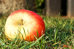 Apple on the grass Royalty Free Stock Images