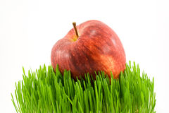 Apple on grass. Red apple on green grass isolated on white Stock Image