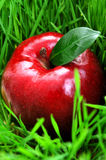 Apple in grass Royalty Free Stock Photos