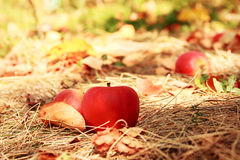 Apple on grass Stock Images