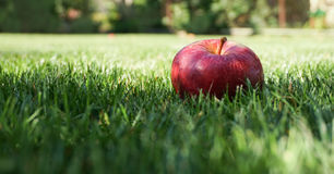 Apple in the grass. Stock Photography