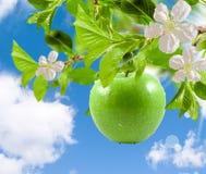 Free Apple Green Royalty Free Stock Image - 18886306