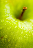 Apple in green Stock Images