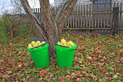 Apple in green pail Royalty Free Stock Photos