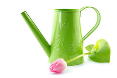 Apple green watering-can and tulip Stock Photography