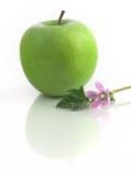apple grenn Obrazy Royalty Free