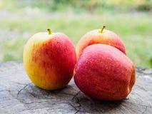 Apple grupowy świeży na drewnianym Zdjęcia Royalty Free