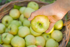 Apple in the hand. Fresh apple in the hand Royalty Free Stock Image