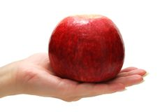 Apple in Hand. Female Hand Holding Apple Isolated on White Background Stock Photos