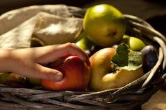 Apple in hand Stock Photo