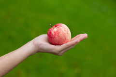 Apple on the hand Stock Image