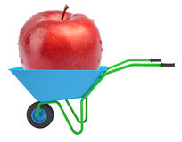 Apple in hand-barrow Royalty Free Stock Image