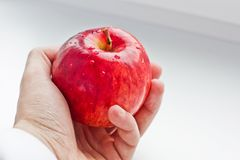 Apple in hand on white background royalty free stock image