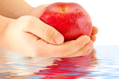 Apple in hands. Child's hands holding a red apple Stock Photography