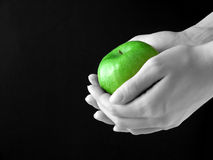 Apple in hands. Green Apple in hands on black background royalty free stock images