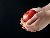 Apple in hands. Red Apple in hands on black background stock images