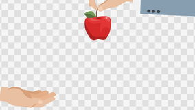 Apple In Hands. Animated scene with Alpha matte. stock video