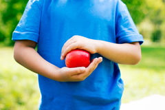 Apple in hands. Holding a red apple by two hands royalty free stock image