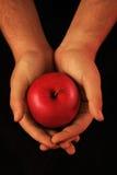 apple hands offering red Στοκ φωτογραφίες με δικαίωμα ελεύθερης χρήσης