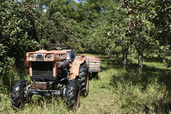 Apple Harvest. Farm tractor with flatbed of fall apples Tecumseh Michigan produce harvest autumn fruit trees royalty free stock photos