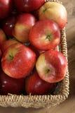 Apple harvest. Autumn apple harvest. Variety Malus domestica Discovery Stock Photos