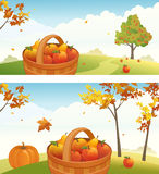 Apple harvest backgrounds. Harvest backgrounds with ripe apples, pears and pumpkin Stock Images