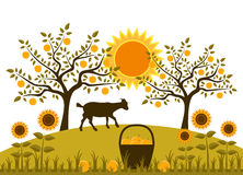 Apple harvest. Basket of apples, sunflowers and goat in garden Royalty Free Stock Photos