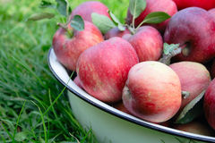 Apple harvest - bowl with apples on the grass. Apple harvest - full bowl with red apples on the grass Stock Photo