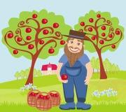 Apple harvest Royalty Free Stock Image