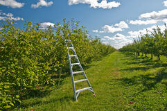 Apple harvest field Royalty Free Stock Photos