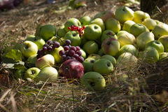 Apple harvest with grapes and viburnum on trave.Osennee sun shines beautifully fruit. Royalty Free Stock Photos
