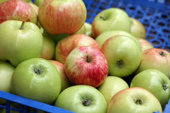 Apple harvest Stock Image