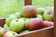 Apple harvest Stock Photo