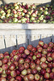 Apple Harvest. Wooden crates filled with apples during apple harvest season Stock Photo