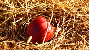 Apple in the hay. Red apple is lying in the hay Stock Image