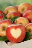 Apple with heart in a box in autumn love topic Royalty Free Stock Photos