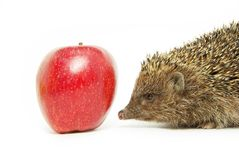 Apple and hedgehog Stock Photos