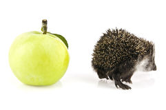 Apple and the hedgehog Royalty Free Stock Photography