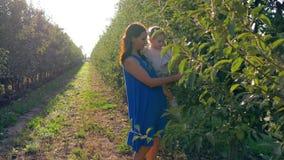 Apple-het gewas, jonge moeder met meisje op handen oogst in de herfstboomgaard tussen rijen van bomen in licht stock video