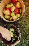 Apple-het plukken Stock Foto's