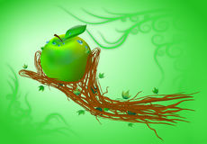 Apple in his hand Royalty Free Stock Photography
