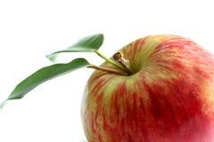 Apple, hojas del verde Fotos de archivo libres de regalías