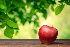 Apple i trädgården Royaltyfri Foto