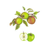 Apple illustration Royaltyfria Bilder