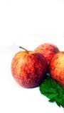 Apple im Weiß Stockbild