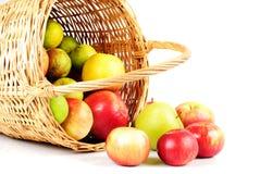 Free Apple In Basket Royalty Free Stock Photos - 16597428