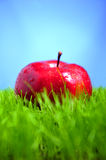 Apple In Grass Stock Photography